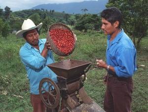 Trabajadores de pulpa de café orgánico en Ejido San Luis. Este café se cultiva a la sombra en la selva tropical de Lacandon.