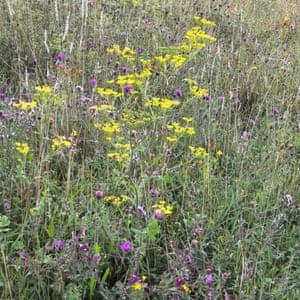 Hinojo y otras flores silvestres