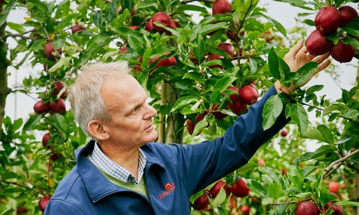 Como te gustan Cómo la ciencia del sueño ayuda a los productores de manzanas británicos a prosperar | La canasta moderna de Tesco