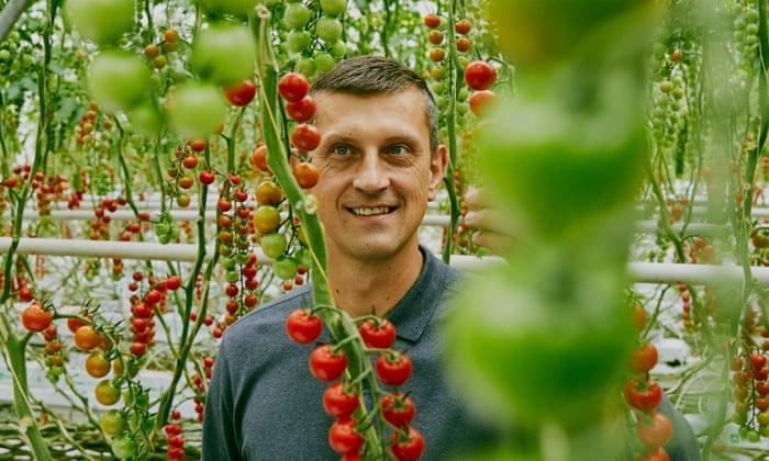 Una historia de la vid: cómo cultivar tomates con sabor mediterráneo | La canasta moderna de Tesco