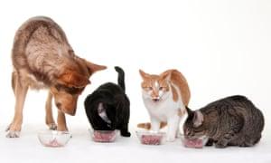 Un perro y tres gatos comen carne de tazones