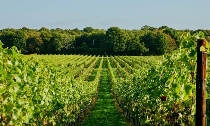 Expectativas de la uva: la efervescencia inglesa se ha convertido en algo para celebrar | La moderna cesta Tesco
