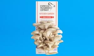 Kit de hongos ostra de Espresso Mushroom Company