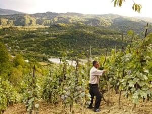 El hijo de Murad Vatsadze se ocupa de los viñedos de la familia en Racha, Georgia