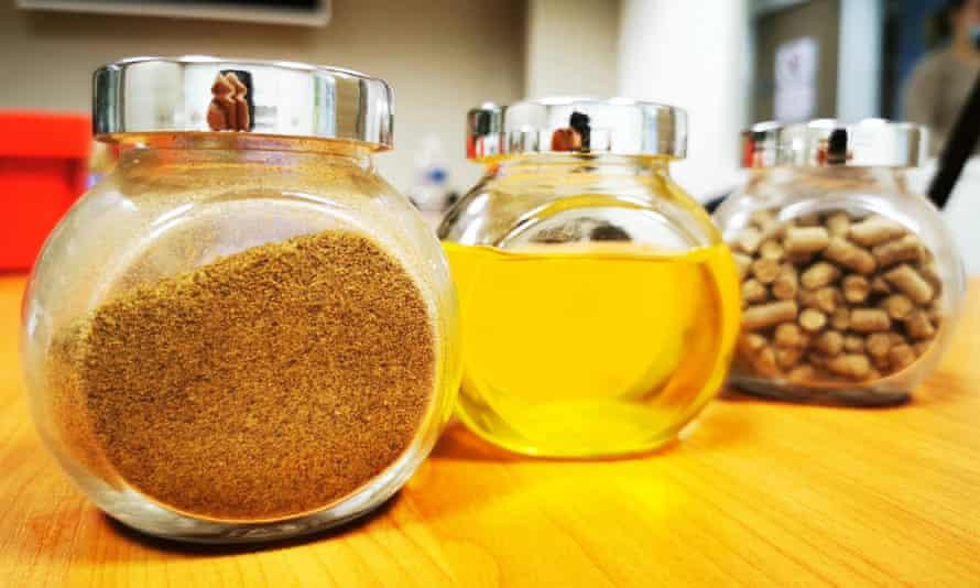 Frascos de vidrio que contienen harina de insectos, aceite y fertilizante, todos hechos en el laboratorio de Ÿnsect.