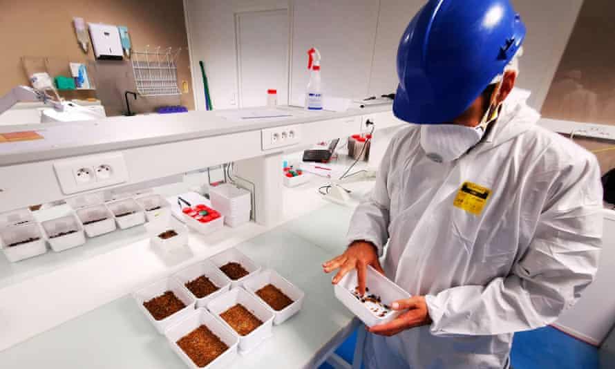 Un hombre con una bata blanca y un casco en un laboratorio inspeccionando una bandeja de insectos