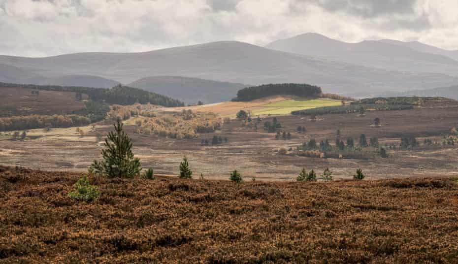 Los Cairngorms, Escocia